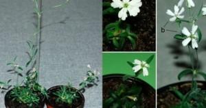 Προϊστορικό φυτό