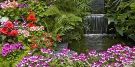 Η δύναμη των φυτών
