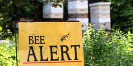 Oι μέλισσες «κατοικούν» στις πόλεις