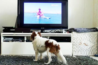 Σκύλος -TV