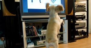 Σκύλος-TV