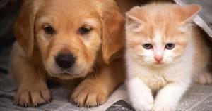 Σκύλος – Γάτα