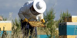 Μελισσοκόμοι
