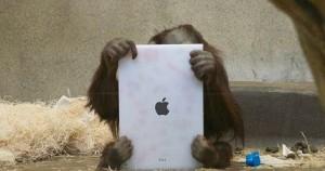 Φανατικοί του iPad και οι ουρακοτάγκοι