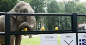 Eλέφαντας Μέντιουμ