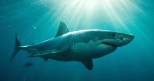 Αυστραλία: Νεκρός από την επίθεση λευκού καρχαρία ένας 20χρονος σέρφερ