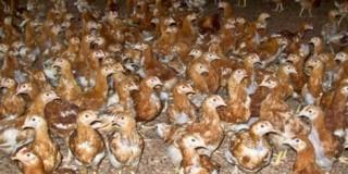 Πτηνοτροφική μονάδα