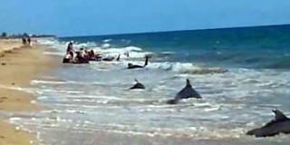 Νεκρές φάλαινες σε παραλία