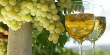 Τα κρασιά της Κεφαλλονιάς