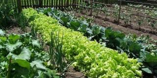 Πως θα φτιάξετε το δικό σας λαχανόκηπο