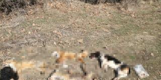Νέες ομαδικές δολοφονίες ζώων στη Ρόδο