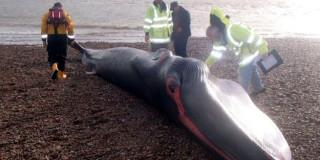 Νεκρή φάλαινα