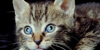 Ποινή φυλάκισης σε νεαρό που έκλεισε γάτα σε στεγνωτήριο