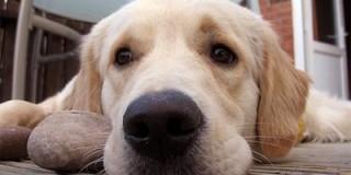 Aδέσποτος σκύλος