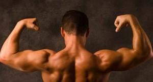 Άγνωστη ως σήμερα πρωτεΐνη μεγαλώνει τους μυς μετά την άσκηση