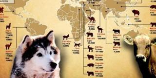 Από πού κατάγεται τελικά ο σκύλος;