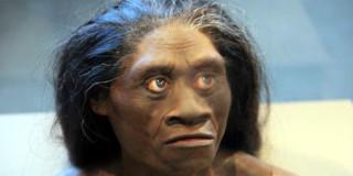 Αναπαράσταση θηλυκού μέλους των H. floresiensis από το Mουσείο Φυσικής Ιστορίας Smithsonian