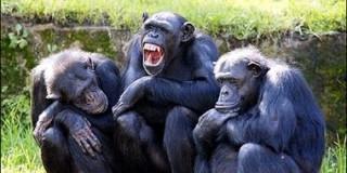 Xαμογελαστές μαιμούδες