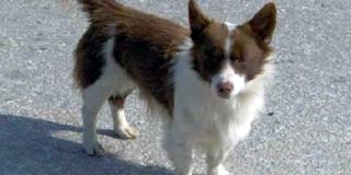 Οι ερευνητές εντόπισαν σκύλους που ταιριάζουν με τα μορφολογικά χαρακτηριστικά της «αλωπεκής»   (Φωτογραφία:  ΑΠΕ )