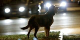 Υποχρεωτική στην Ιταλία η βοήθεια σε ζώο