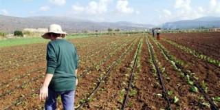 Εναλλακτικές καλλιέργειες