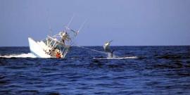 Απαγόρευση Αλιείας ξιφία κατά τον μήνα Μάρτιο
