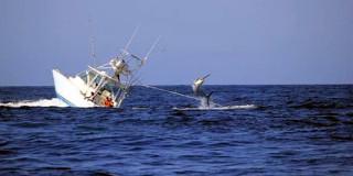 Αλιεία Ξιφία