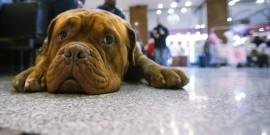 Μέσα στο μυαλό του σκύλου…