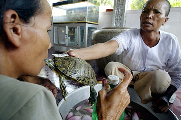 Νεροχελώνες κατά των ρευματισμών