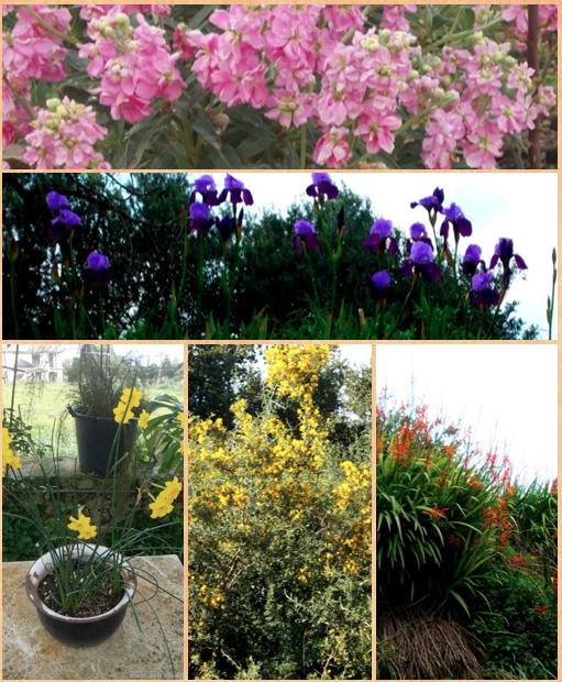 Πολύχρωμα υπέροχα λουλούδια στα Κουντουράτα