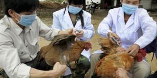 Παγκόσμιος Οργανισμός Υγείας απέκλεισε την Τετάρτη τον κίνδυνο μιας πανδημίας