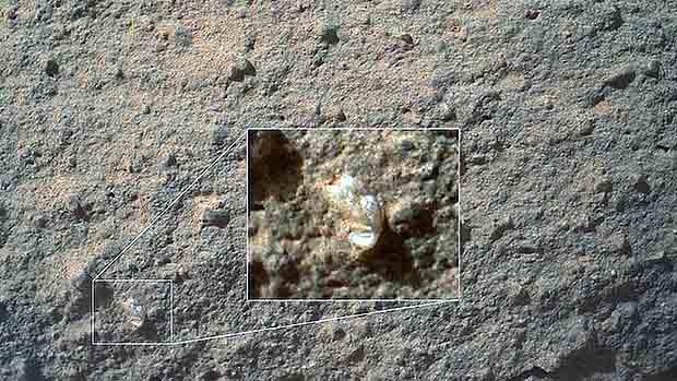 art-Mars-Flower