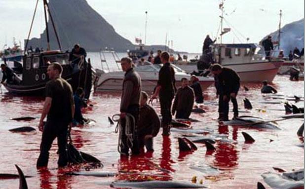 Δολοφονία δελφινιών