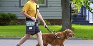Η συγκινητική ιστορία δύο τυφλών που ερωτεύτηκαν χάρη στα σκυλιά τους
