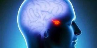 Η πρωτεΐνη-κλειδί του στρες παράγεται από την υπόφυση του εγκεφάλου