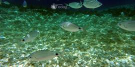 Ψαροντούφεκο: Ψάρεμα στην Κεφαλονιά