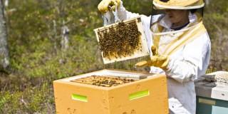 Εγκρίθηκε το πρόγραμμα εκπαίδευσης μελισσοκόμων