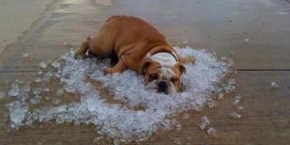 Πώς θα βοηθήσετε ένα ζώο που έχει υποστεί θερμοπληξία