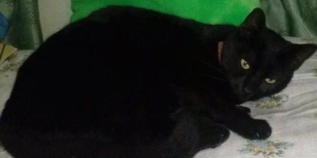 Χάθηκε γάτα στο Αργοστόλι