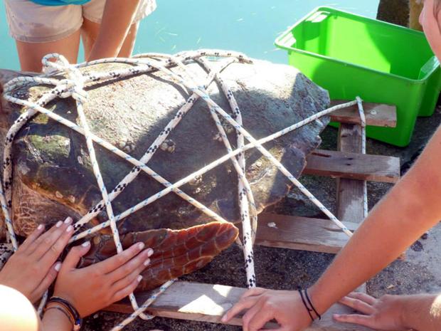 Επιχείρηση διάσωσης χελώνας