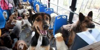 Ελεύθερη η μεταφορά ζώων με ΚΤΕΛ