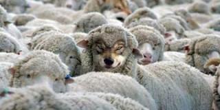 Μ.Φόρτες: «Βάλανε τον λύκο να φυλάει τα πρόβατα» !