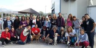 Έλληνες έσωσαν 32 αδέσποτα ζώα από την κόλαση της Ρουμανίας