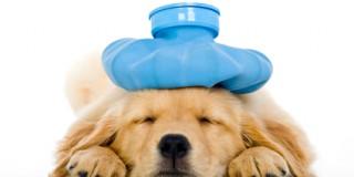 Πρώτες βοήθειες για το σκύλο σας
