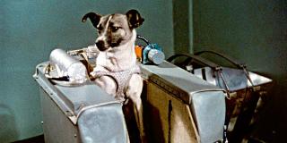 Laika: Το Πρώτο Σκυλί που θυσιάστηκε για την ανθρωπότητα