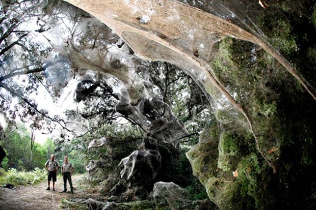 Η γιγαντιαία αράχνη του Κονγκό