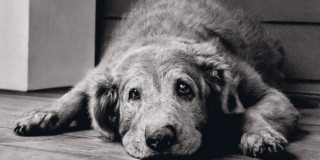 Συμβουλές για τη φροντίδα του υπερήλικου σκύλου σας