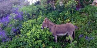 Ένας γαιδαράκος στο Φισκάρδο