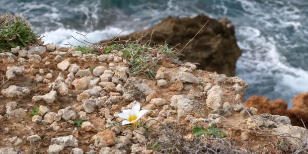 Λουλούδι στις άμμες