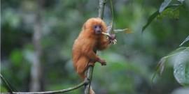 «Σε εξέλιξη» η έκτη μαζική εξαφάνιση ειδών στον πλανήτη Γη